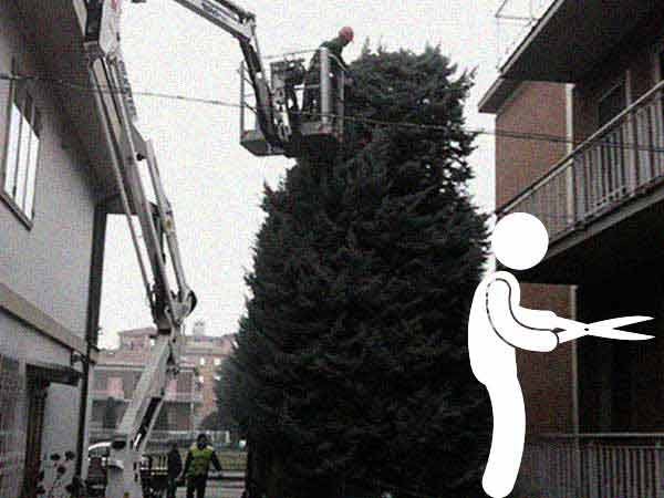 Potatura-alberi-ad-alto-fusto-prati