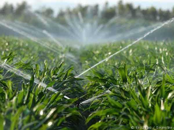 Impianti-di-irrigazione-alberi-parma