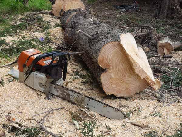 Preventivi-abbattimento-alberi-parma