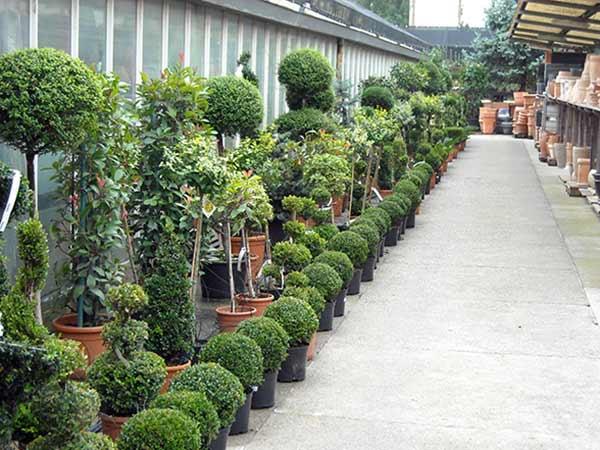 Progettazione-giardini-parma